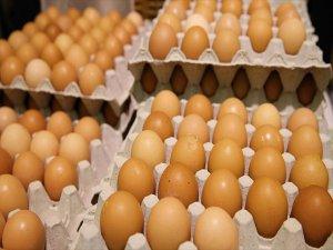 Hollanda Hükümetinden 'İlaçlı Yumurta' Açıklaması