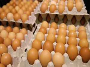 Türkiye, Avrupa'daki Yumurta Krizini Önlem Açısından İzlemeye Aldı