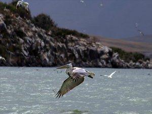 Pelikanlardan Görsel Şölen