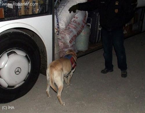 Amasya'da 12 Kilo Eroin Ele Geçirildi