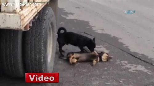Köpekten 'Acı' Vefa