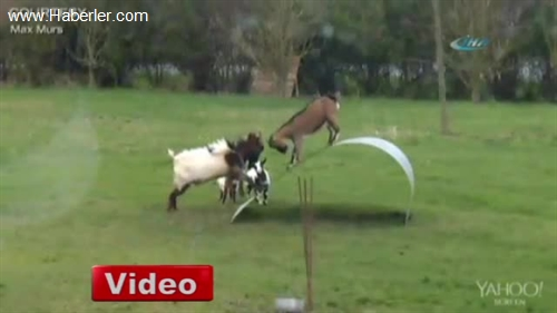 Sporcu Keçiler