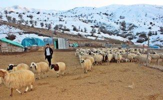 Erzincan'da bir yılda 150 bin'den fazla hayvan satıldı