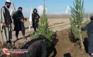 """Afganistan'da Taliban'dan """"Fidanlar Toprağa"""" Kampanyası"""