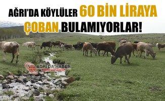 Ağrı'da Köylüler 60 Bin Liraya Çoban Bulamıyorlar