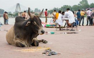 Hindistan'da İnek Yüzünden Bir Müslüman Linç Edildi!