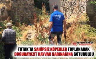 Tutak'ta Sahipsiz Köpekler Toplanarak Doğubayazıt'a Götürüldü