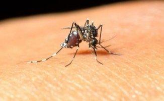 Avrupa Birliği'nde Batı Nil Virüsü Tehdidi! Batı Nil Virüsü Nedir?