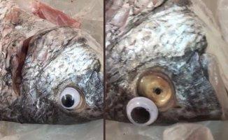 Balıkçının Hilesi Sosyal Medyada Olay Oldu