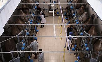 Eleşkirt Hayvansal Üretim Yüksekokulu Öğrencileri İlk Kez Meslek Tanımı Aldı