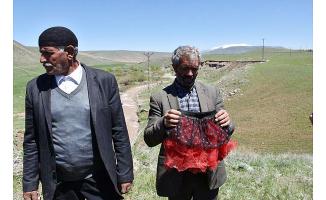 Kars'ta Kaybolan Küçük Kız Tüm Aramalara Rağmen Bulunamadı