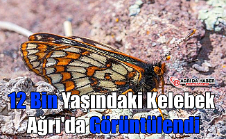 12 Bin Yaşındaki Kelebek Ağrı'da Görüntülendi