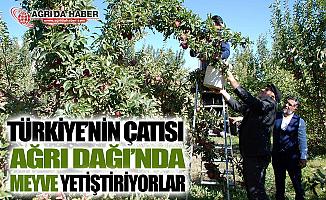 Türkiye'nin Çatısı Ağrı Dağı'nda Meyve Yetiştiriyorlar