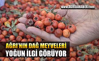 Ağrı'da Doğada Yetişen Yabani Meyvelere İlgi Yoğun