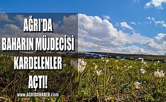 Ağrı'da Baharın müjdecisi kardelenler doğayı süsledi