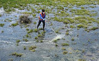 Tatvan Belediyesi Larva Üreme Noktalarını İlaçlıyor