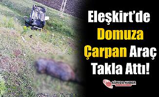 Eleşkirt'de Domuza Çarpan Araç Takla Attı!