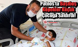 Patnos'ta Başıboş Köpekler Küçük Çocuğa Saldırdı!