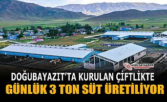 Doğubayazıt'ta kurdukları tesis ile günlük 3 Ton süt üretiyorlar