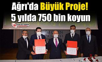 Ağrı'da Büyük Proje! 5 yılda 750 bin koyun