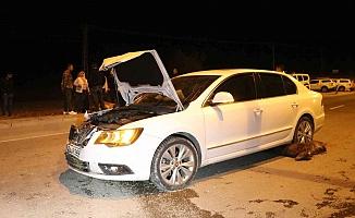 Ağrı'da Bir Otomobil Hayvan Sürüsüne Çarptı