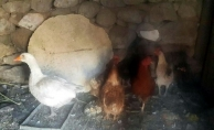 Ağrı'da Kuş Giribi nedeniyle 2 köy karantinaya alındı