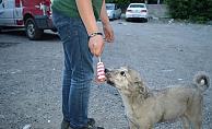 Ağrı'lı vatandaş Sıcak Havada bunalan köpeğe dondurmasını yedirdi