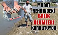 Ağrı Murat Nehrinde Balıklar Neden Ölüyor!