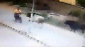 Boğa motosiklete saldırdı