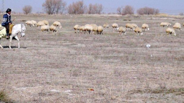Tarla haline getirilen meralar hayvancılığı tehdit ediyor
